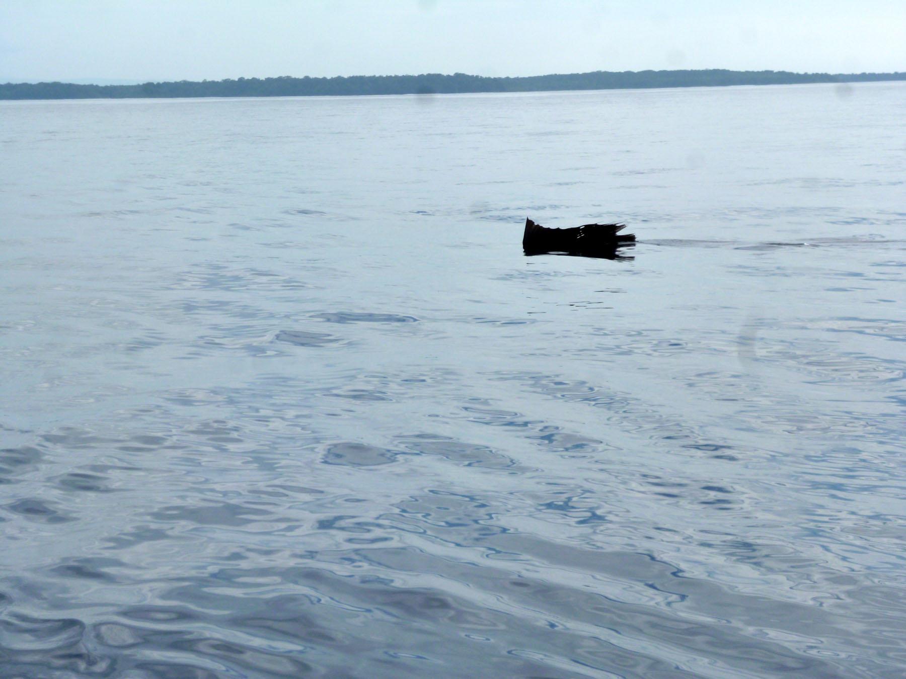 sail-fish.jpg.jpeg