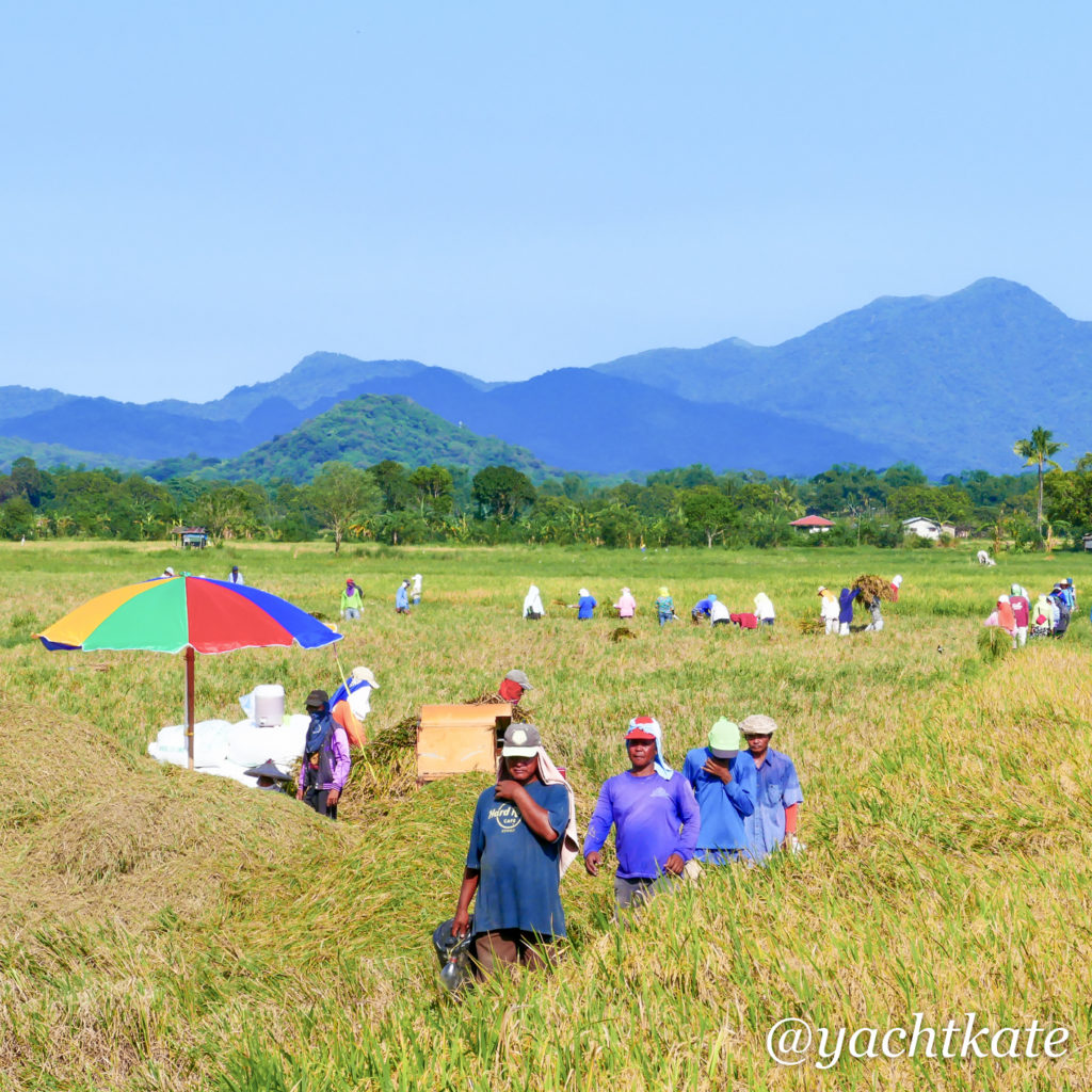 Philippines Rice Fields, Heather Francis-10.jpg