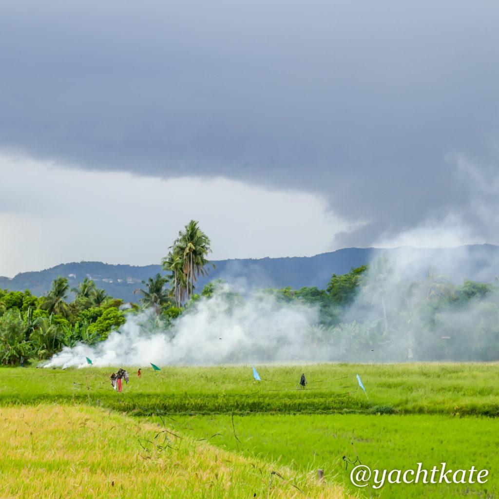 Philippines Rice Fields, Heather Francis.jpg