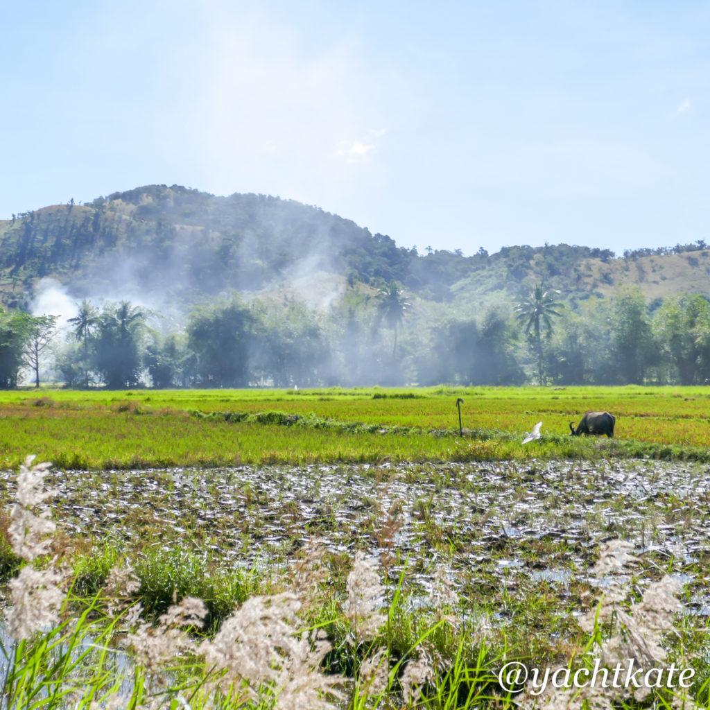 Philippines Rice Fields, Heather Francis-14.jpg