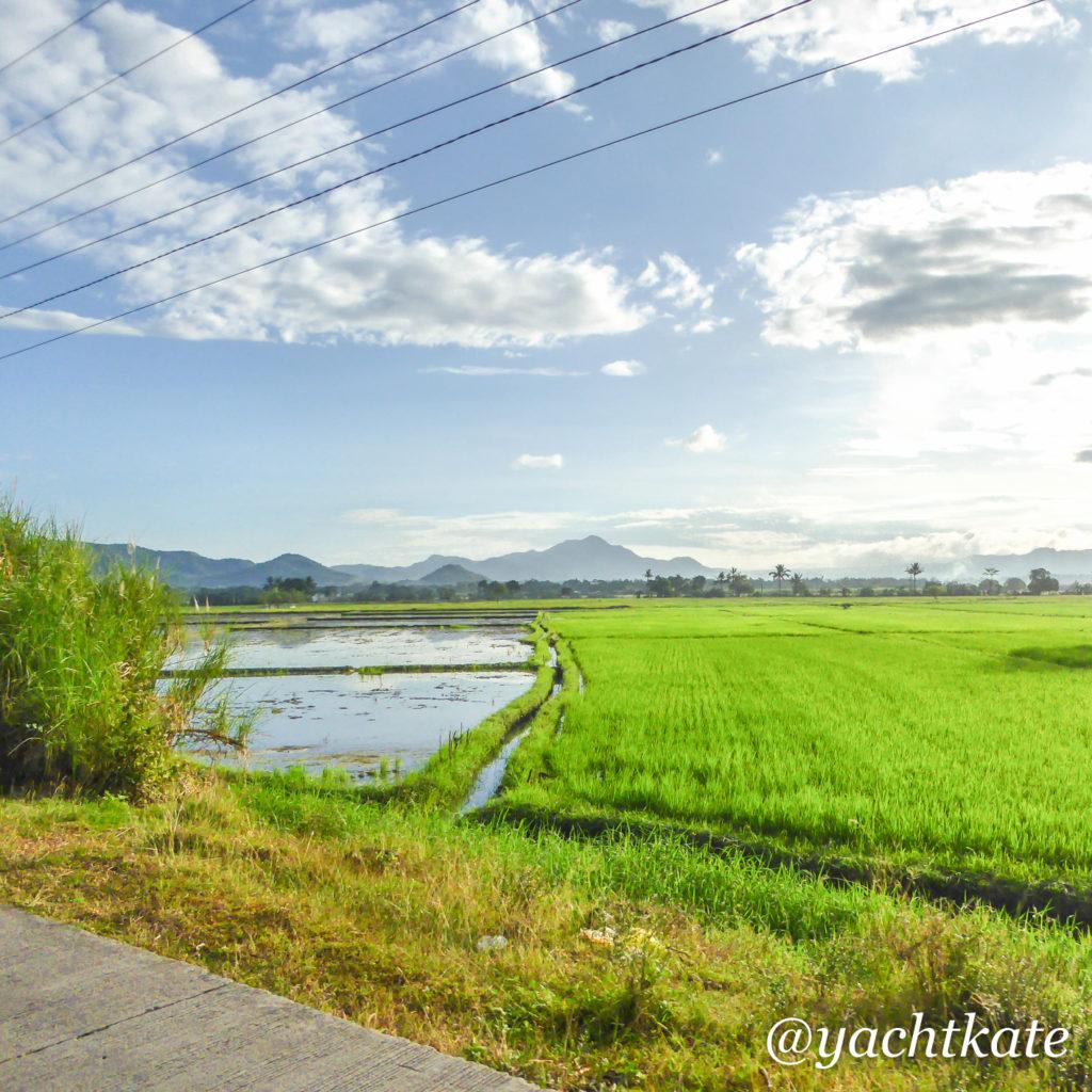 Philippines Rice Fields, Heather Francis-2.jpg