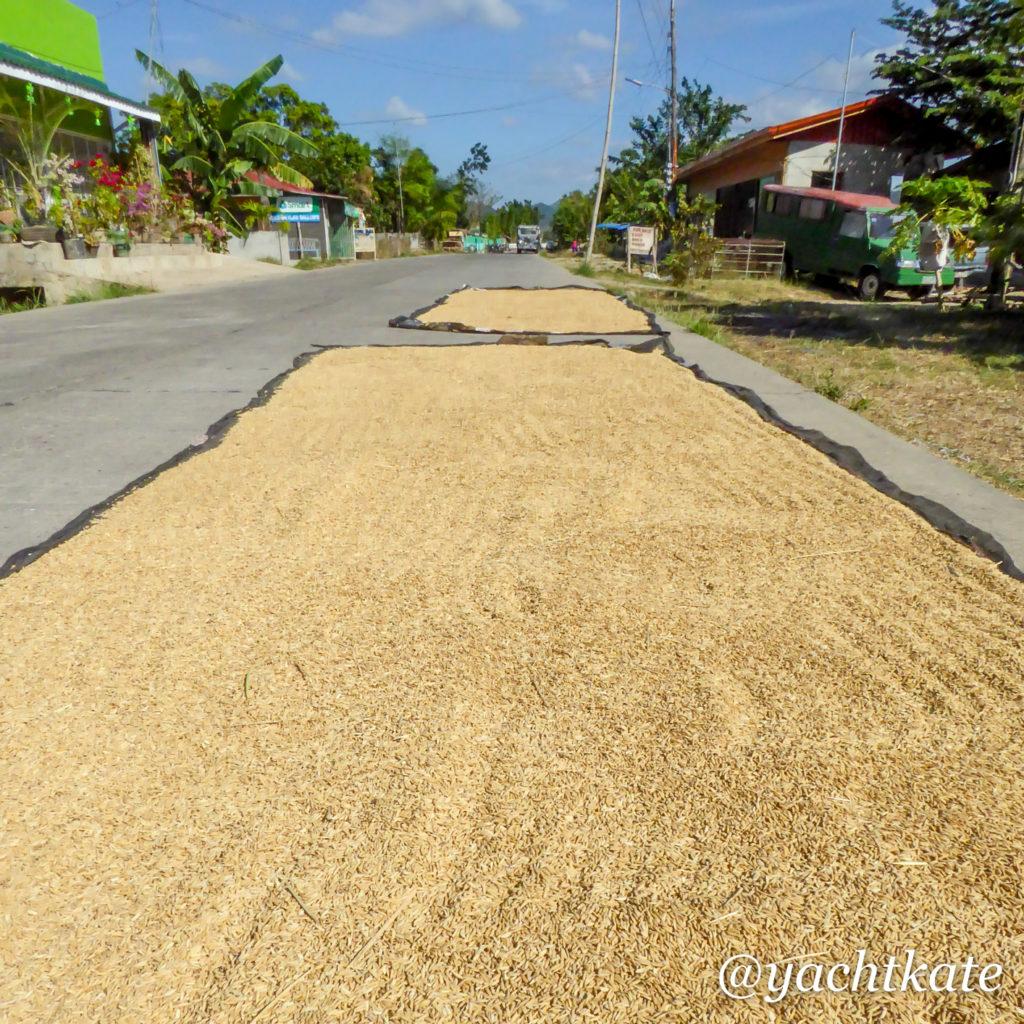Philippines Rice Fields, Heather Francis-4.jpg
