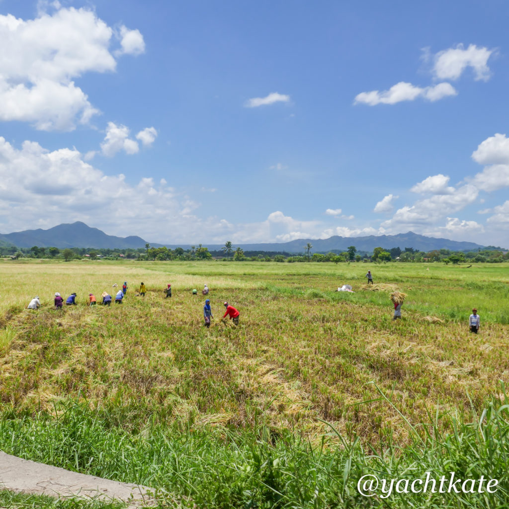 Philippines Rice Fields, Heather Francis-5.jpg