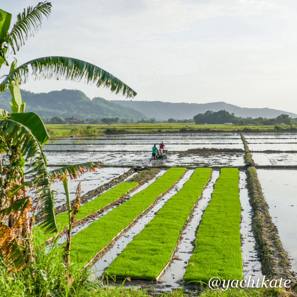 Philippines Rice Fields, Heather Francis-7.jpg